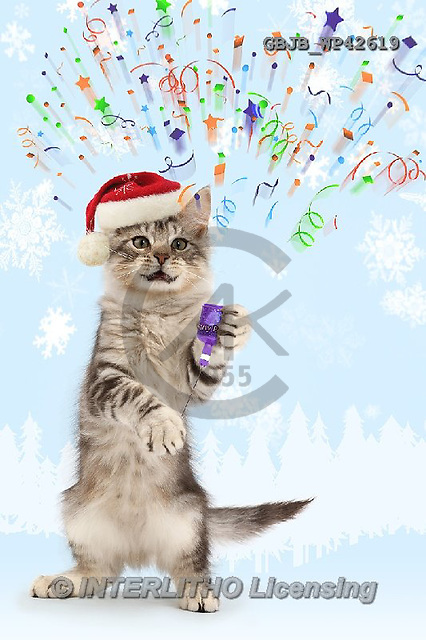 Kim, ANIMALS, REALISTISCHE TIERE, ANIMALES REALISTICOS, cats, photos,+Silver tabby kitten, Loki, 3 months old, letting off a party popper,++++,GBJBWP42619,#a#