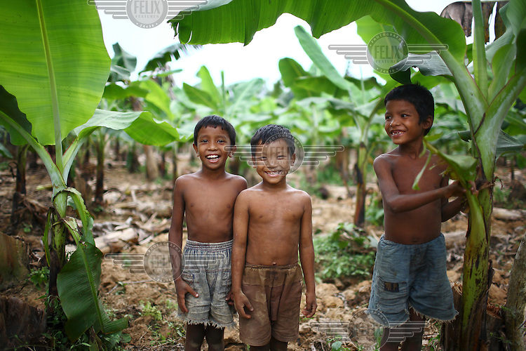 A group of Garo boys standing in a plantation of young banana palms laughing togther. The Garo (or Mandi, as they refer to themselves) are an ethnic minority thought to be of Tibeto-Burmese origin. Prior to British rule they were mostly anamists but missionary work led the majority to convert to Christianity. The Garo of the Madhupur forest have long been under the threat of eviction by the government and the forest that they gain much of their livelihood from is being rapidly destroyed by unregulated logging.