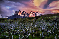 Paine Massif mountains and dead trees (Nirre). Torres Del Paine National Park, Chile, Patagonia