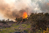Heath fire in Ashdown Forest, Sussex. England