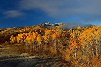 Early October yields vibrant autumn colors along the eastern flank of Mt. Timpanogos.  Wasatch Mountains, Utah.