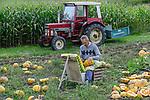 Austria Styria, cultivation of pumpkin, the seeds are used for processing of pumpkin seed oil, small farmer at manual work / Oesterreich Steiermark, Anbau von Kuerbis und Verarbeitung zu Kuerbiskernoel, Kleinbauer in Marensdorf bei der eher seltenen traditionellen Handernte und Verarbeitung