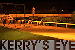 TOP DOG: Saleen Pier No.3 winner of the Kerry Group County Championship 550 Final at the Kingdom Greyhound Stadium on Friday 2nd was Gold Slipalong No.6 and 3rd was Flat Week No.5..