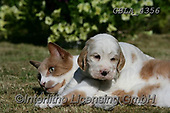 Bob, ANIMALS, REALISTISCHE TIERE, ANIMALES REALISTICOS, dogs, photos+++++,GBLA4356,#a#, EVERYDAY