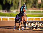 OCT 28: Breeders' Cup Juvenile Fillies Turf entrant Sweet Melania, trained by Todd A. Pletcher,  at Santa Anita Park in Arcadia, California on Oct 28, 2019. Evers/Eclipse Sportswire/Breeders' Cup