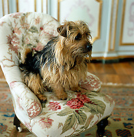 A small terrier sits in his own miniature armchair
