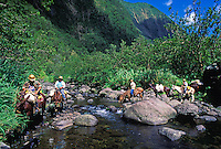 Kohala Ditch Trail workmen, on horseback, tranversing stream
