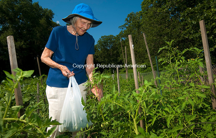 SOUTHBURY,  CT--- -071716JS01-Heritage Village resident 96-year old Rita Bagdonas, picks vegetables in her garden plat at the River Garden on Sunday afternoon. Bogdonas, who has planted beans, tomatoes, cauliflower and broccoli, said she still loves gardening. Jim Shannon Republican American
