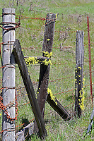 Old fence posts with rusted barbed wire and bright yellow lichen along Muir Mill Road in Willits in Mendocino County in Northern California.