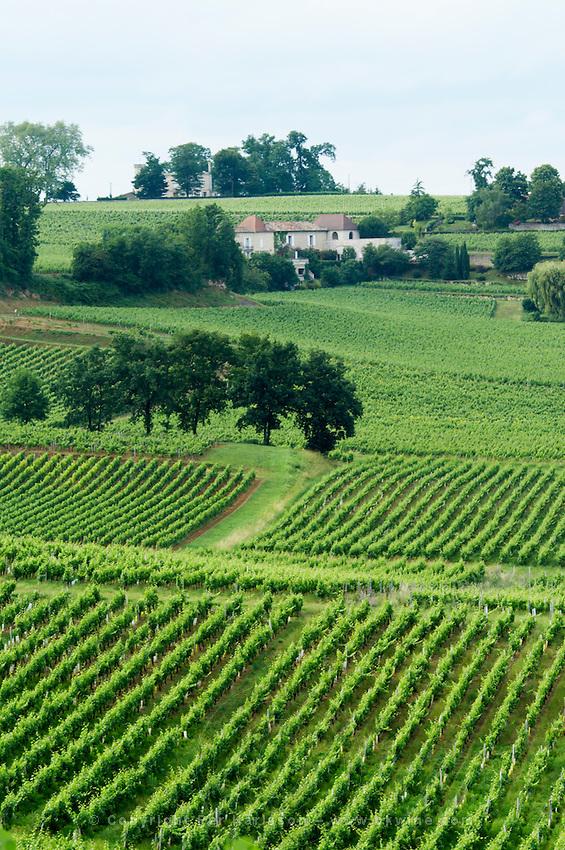 vineyard saint emilion bordeaux france