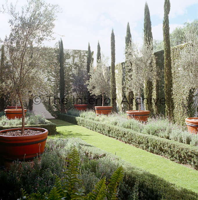 The central garden is punctuated with olive trees in terracotta pots, creeping fig and cypress trees