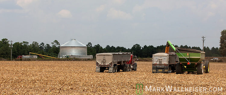 Randy Dowdy's corn harvests is loaded into a pair of semis in the field (foreground) and two semis from his corn bin in the background on his farm near Valdosta, Ga August 6, 2014.