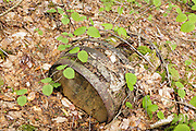 Artifact (wooden barrel) along the old Sawyer River Logging Railroad near Camp 6. This old rail-line is now the Sawyer River Trail in Livermore, New Hampshire USA