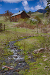 Idaho, North Central, Idaho County, Grangeville, Whitebird. A barn sits on a hillside with a small stream and blooming syringas in spring.