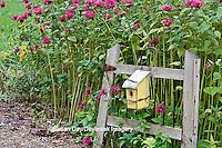 63821-207.08  Birdhouse on rustic fence  in garden with Raspberry Wine Bee Balm (Monarda didyma 'Raspberry Wine')  Marion Co. IL