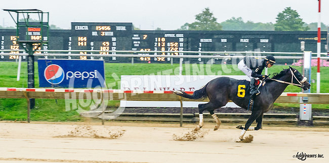 Yo Soy El Lobo winning at Delaware Park on 10/8/16