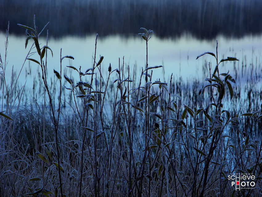 Early morning frost covers vegetation along the shore of Spider Lake in the Chequamegon National Forest.