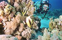 Sport / Diving