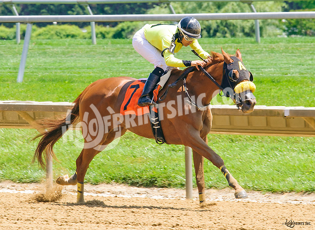 Southernperfection winning at Delaware Park on 6/15/17