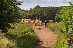 2019-08-29 - Briddlesford Lodge Farm