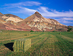 John Day Fossil Beds National Monument, OR<br /> Hay bales in a field near the Cant Ranch under the colorful rock layers of Sheep Rock in evening light in the monument's Sheep Rock Unit