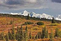 Autumn colors over the tundra and taiga landscape of Denali National Park, Alaska Range mountains in the distance, Interior, Alaska.