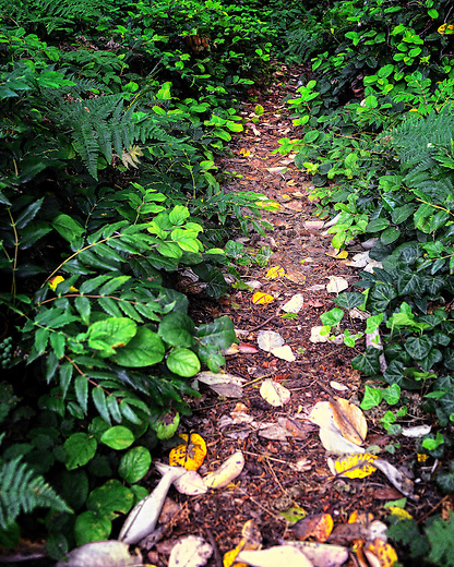 Hiking trail on Bainbridge Island, Washington