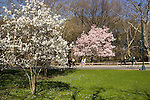 New York City, New York: Spring time with blossoms in Central Park  .Photo #: ny264-14721  .Photo copyright Lee Foster, www.fostertravel.com, lee@fostertravel.com, 510-549-2202.