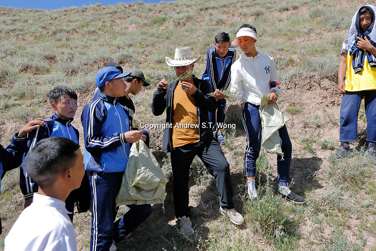 Nangqen County, Yushu Tibetan Autonomous Prefecture, Qinghai Province, China - Tibetan medical students collect wild herbs, August 2019.