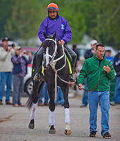 Trainer Kelly Breen leads Black Onyx to the track to work out in preparation for the Kentucky Derby at Churchill Downs on April 29, 2013.