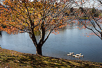 Ducks swim on a lake in the mountains of North Carolina near Junaluska.