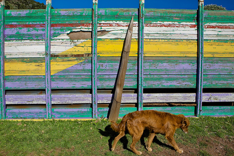 Dog walks past colorful painted fence in a village near Todos Santos Cuchumatan, Western Highlands, Guatemala
