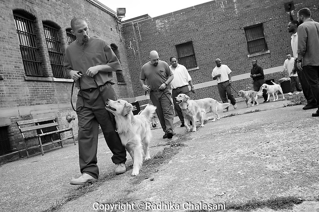 BEACON, NEW YORK:  Andy (R) walks Rezzie around the courtyard during a training class for the Puppies Behind Bars (PPB) program at Fishkill Correctional Facility. The training program prepares puppies to be service dogs and consists of one day of class a week on topics such as obedience training, grooming, basic care of the dogs. The dogs spend 18-20 months in the program working with the prisoners.