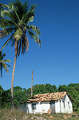 Bahia, Brazil. Dilapidated whitewashed shack built of brick with a tiled roof next to a palm tree in bright sunshine.