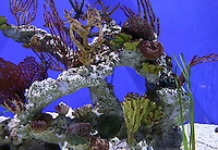 Stock photo of colorful coral reef and seaweeds.