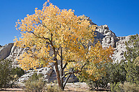 Plaza Blanca, near Abuiquiu, New Mexico, is also known as the White Place and was one of the landscapes that inspired painter Georgia O'Keefe.