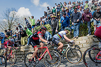 World Champion Peter Sagan (SVK/Bora-Hansgrohe) up the infamous Muur van Geraardsbergen (1100m/7.6%) that is back in the parcours after a 5 year hiatus<br /> <br /> 101th Ronde Van Vlaanderen 2017 (1.UWT)<br /> 1day race: Antwerp › Oudenaarde - BEL (260km)