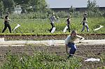 Foto: VidiPhoto<br /> <br /> HEMMEN &ndash; Gewapend met allerlei hulpmiddelen gaan leerlingen van de Lammert van Buerenschool uit Zetten woensdag op jacht bij tuinderij De Stroom in Hemmen (Gld) naar bloemetjes, bijtjes en tal van andere kruipende en vliegende diertjes. Daarmee wordt de biodiversiteit bij de bioboer in kaart gebracht. Ze krijgen daarbij hulp van vrijwilligers van Natuur en Milieu. De Stroom is verbonden aan Ekoboerderij De Lingehof in Hemmen, met 95 ha. grond een van de grootste biologische akkerbouwbedrijven van ons land. Het bedrijf heeft zo&rsquo;n 3 km. aan akkerranden met 20 soorten bloemen en planten. Hoe meer insecten daar op af komen, des te gezonder de bodem, met als gevolg minder ziekten in de gewassen. Inmiddels wordt in Nederland al op zo&rsquo;n 80.000 ha. biodiversiteit toegepast en het aantal boeren (nu 8000) dat zich aanmeldt bij zogenoemde agrarische natuurco&ouml;peraties neemt nog steeds toe. De overheid stelt jaarlijks 60 miljoen euro beschikbaar voor landschapsbeheer.