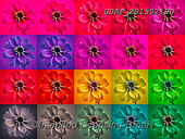 Assaf, LANDSCAPES, LANDSCHAFTEN, PAISAJES, collages, paintings,+Collage, Colorful, Dahlia, Dahlias, Floral, Flower, Flowers, Multicolored, Multicoloured, Photography,Collage, Colorful, Dahl+ia, Dahlias, Floral, Flower, Flowers, Multicolored, Multicoloured, Photography+++,GBAF20150219D,#l#, EVERYDAY ,puzzle,puzzles ,collage,collages