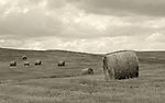September 2009:  Hay bales across a field near Steamboat Springs, Colorado.