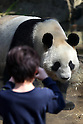 "April 1, 2011, Tokyo, Japan - A female giant panda ""Shin Shin"" is seen at Ueno Zoo in Tokyo on Friday, April 1, 2011, on the first day its appearance with a fellow male panda ""Ri Ri"", not seen, to the public. Thousands of visitors flocked to catch a first glimpse of a pair of pandas on loan from China, in a welcome respite from the gloom over last month's massive earthquake and tsunami in northern Japan. (Photo by Daiju Kitamura/AFLO) [1045] -ty-"