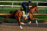 LOUISVILLE, KENTUCKY - APRIL 29: Plus Que Parfait, trained by Brendan Walsh, exercises in preparation for the Kentucky Derby at Churchill Downs in Louisville, Kentucky on April 29, 2019. Scott Serio/Eclipse Sportswire/CSM