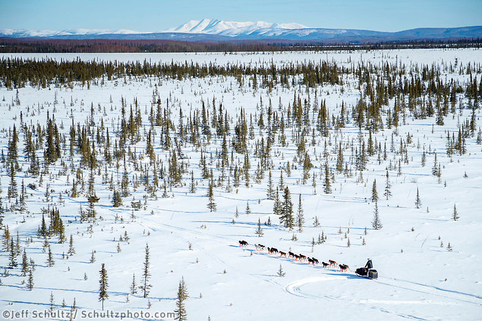 A team crosses through a spruce tree forest shortly after leaving the Galena checkpoint during the 2017 Iditarod on Friday afternoon March 10, 2017.<br /> <br /> Photo by Jeff Schultz/SchultzPhoto.com  (C) 2017  ALL RIGHTS RESERVED