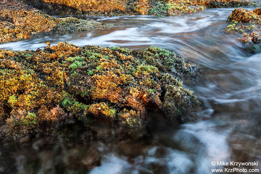 Water flowing through rocks covered with green & yellow algae during low tide at Diamond Head beach in Honolulu