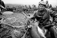 SWEDEN / Parka / 15.08.2000..Anders Omma, A Saami reindeer herder straddles a bull at the autumn herd separations at a camp near Jokkmokk, Sweden above the Arctic Circle. The Saami are Northern Europe's indigenous people and live in each of the Scandinavian countries as well as on the Kola Peninsula in Russia. Since being subjugated by the Norwegian and Swedish governments in the 1600s and converted to Christianity, they continue to fight an uphill battle to retain their grazing lands and traditional way of life. ..© Davin Ellicson / Anzenberger