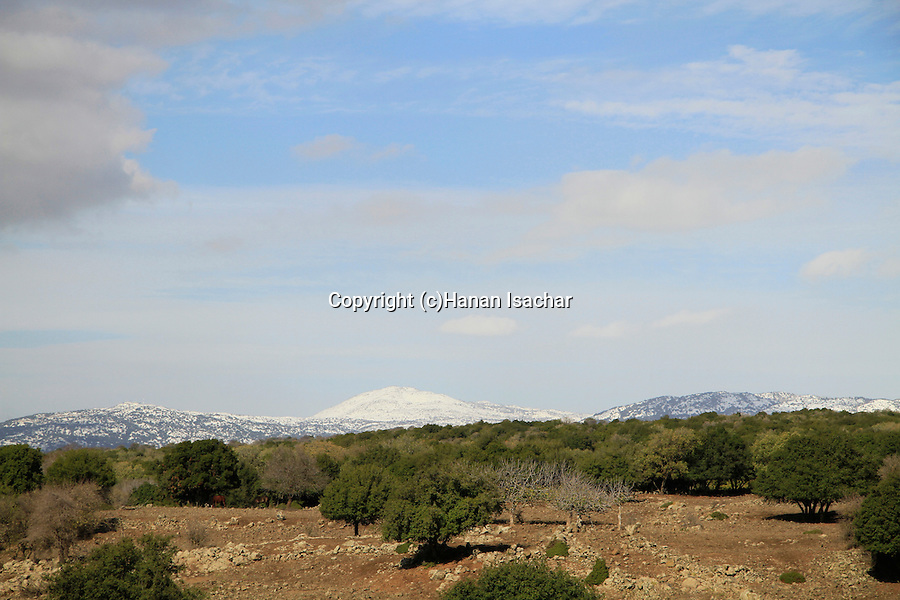 Odem forest in the Golan Heights, Mount Hermon is in the background