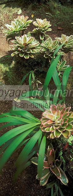 France/DOM/Martinique/Balata/Les jardins: Palmeraie - Détail d'un massif de fleurs tropicales