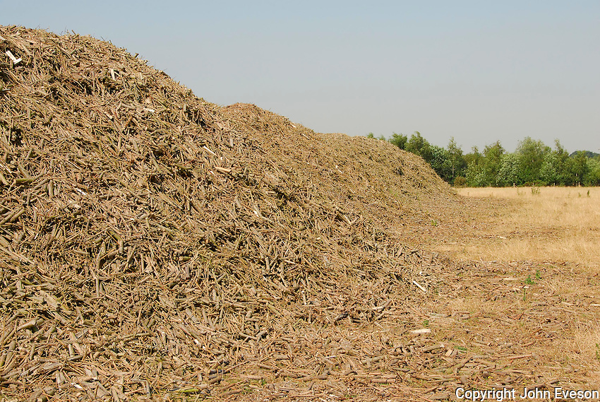 A 500 tonne heap of harvested willow ready for transport to Drax power station.