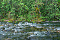 ORCAN_D208 - USA, Oregon, Mount Hood National Forest, Salmon-Huckleberry Wilderness, Salmon River, a federally designated Wild and Scenic River and surrounding forest.