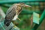 Birds - Trinidad